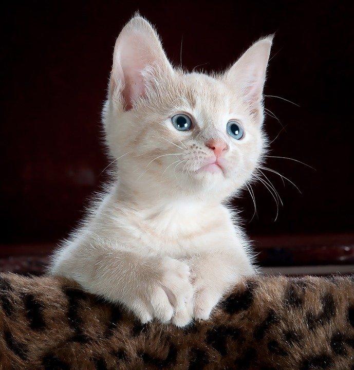 В Уфе спасатели спасли котенка, застрявшего в стене