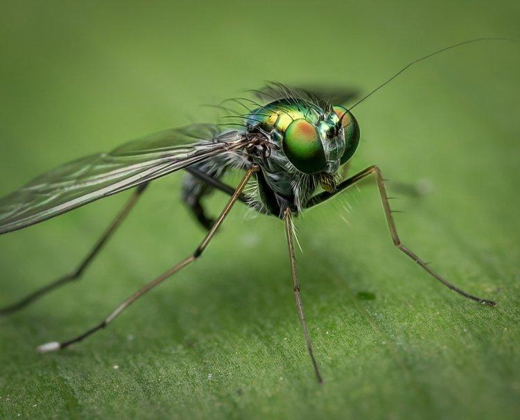 Анита Цой 18 лет выращивала усебя втеле личинку мухи