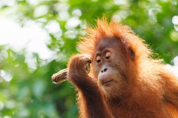 ТОП-5 самых умных и сообразительных животных на планете