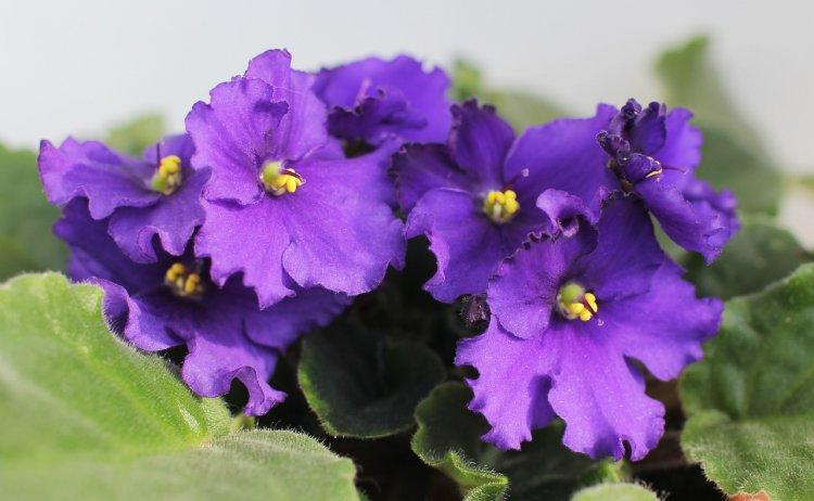 Какие цветы нельзя держать дома: они притягивают несчастья