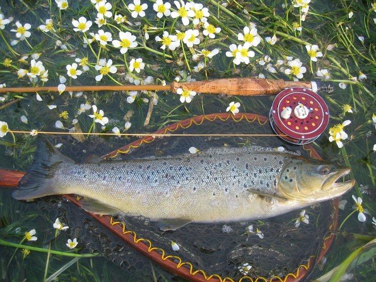 В Башкирии депутата осудили за незаконный улов «краснокнижной» рыбы