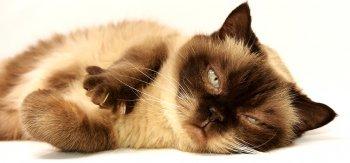 Как отучить кошку драть мебель и обои: простые советы