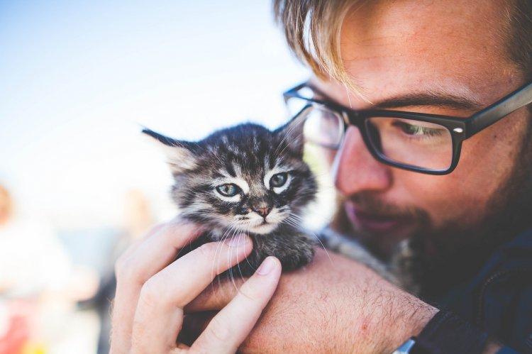 Почему каждому мужчине нужен кот, рассказали ученые