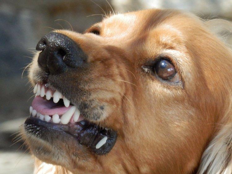 В Уфе возле школы бездомные собаки покусали ребенка