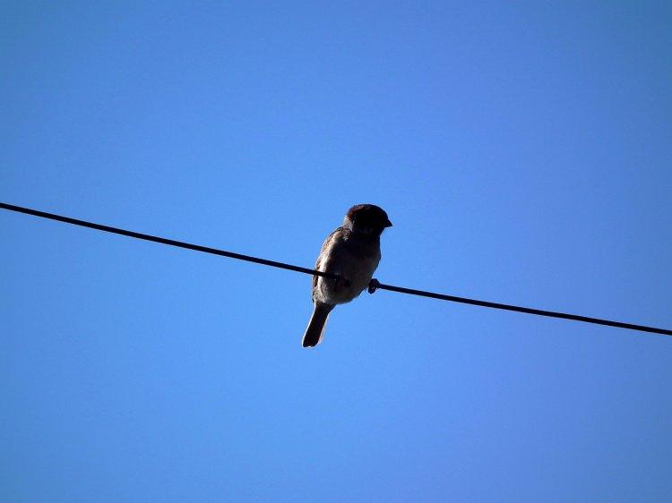 «Башкирэнерго» потратило 69 млн рублей для защиты птиц от гибели на проводах