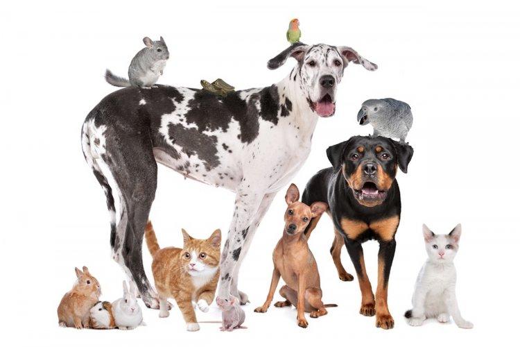 Названы 5 животных, способных исцелять людей