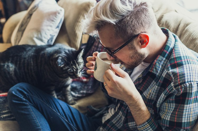 Ученые рассказали, как определить характер человека по его кошке