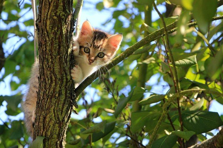 Названы самые странные породы кошек