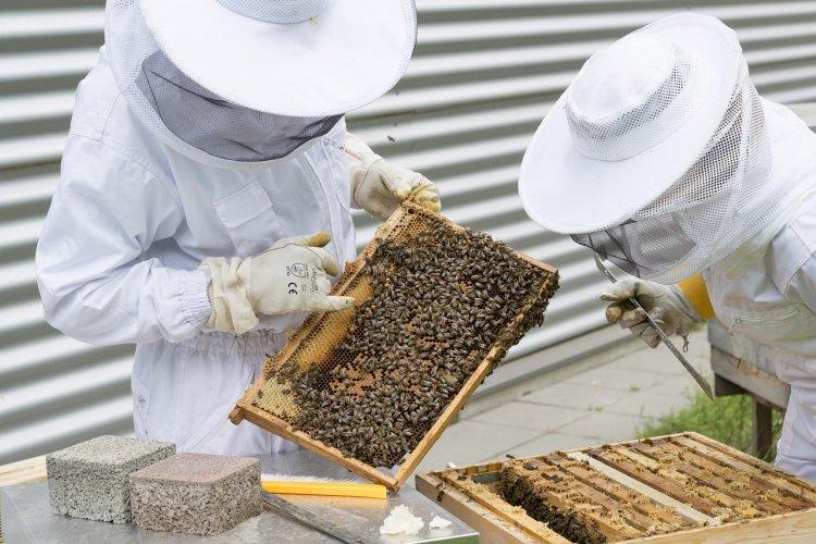 Пчеловоды Башкортостана собираются на съезд