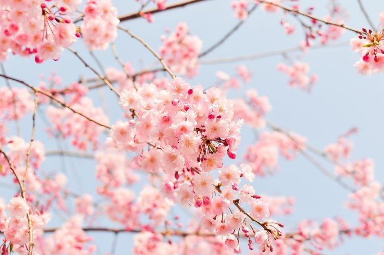 В Уфе пройдут мероприятия, посвященные «Крымской весне»