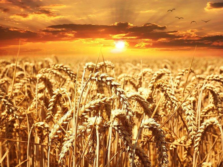 Республика Башкортостан  отгружает зерно в Латвию и Казахстан