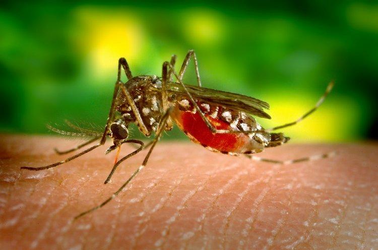 Ученые нашли идеальную музыку для борьбы с комарами