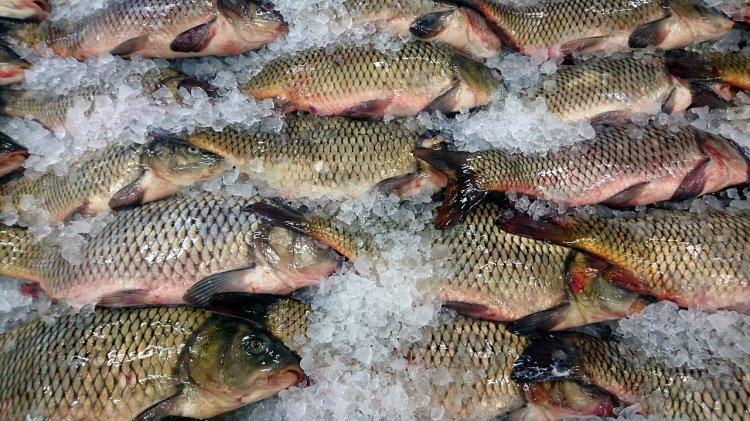 В Башкирии пресекли незаконную продажу рыбы