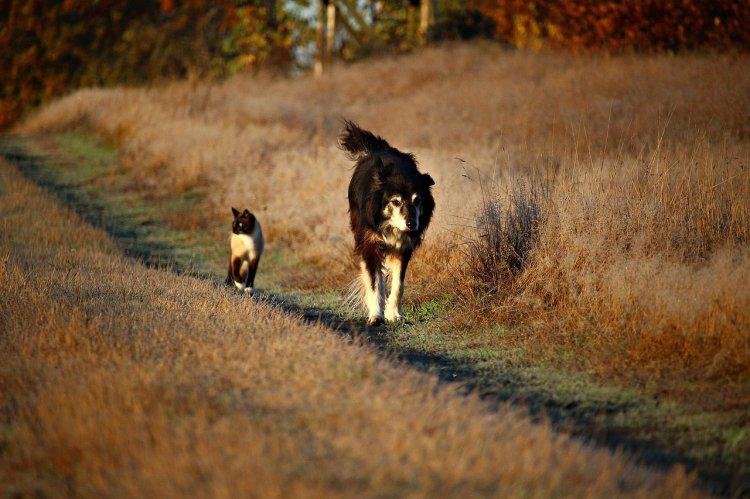 Исследователи посчитали, какой вред климату наносят кошки и собаки