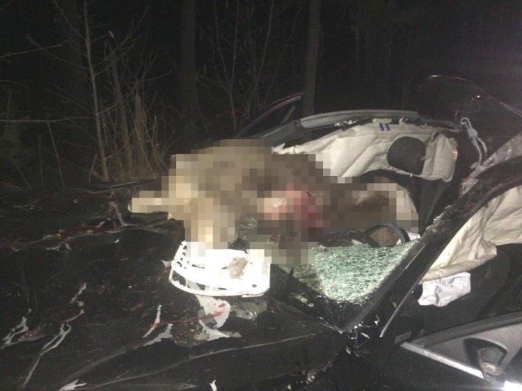 В Башкирии водитель «Audi А4» сбил лося, есть пострадавшие