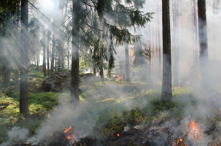 В Башкортостане вводится особый противопожарный режим