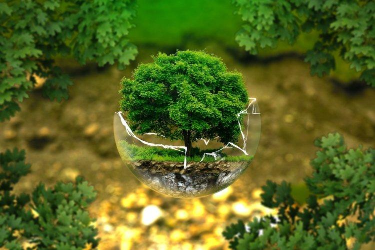 В рамках акции «Зелёная Башкирия» высажено 1,5 млн деревьев