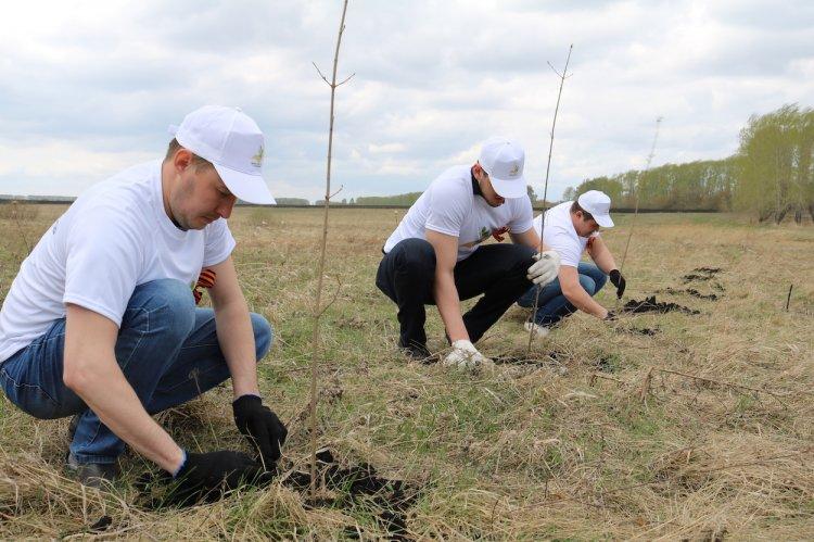 Сотрудники ФКУ Упрдор «Приуралье» высадили деревья в память о погибших в Великой Отечественной войне
