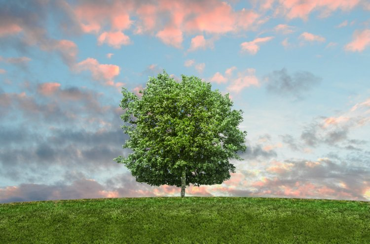В Башкирии в рамках всероссийской акции по озеленению территорий посадят почти 400 тысяч деревьев