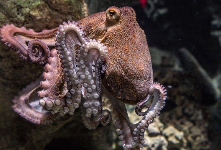 Осьминоги имеют внеземное происхождение, заявили ученые