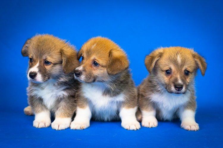 Кот и пес: какую экзотику предлагают хозяевам домашних животных страховщики