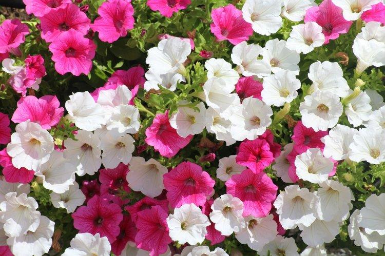 В Стерлитамаке высадили 220 тысяч цветов