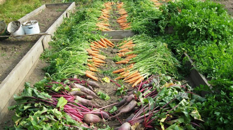 В Башкирии утвердили план мероприятий по поддержке садоводов