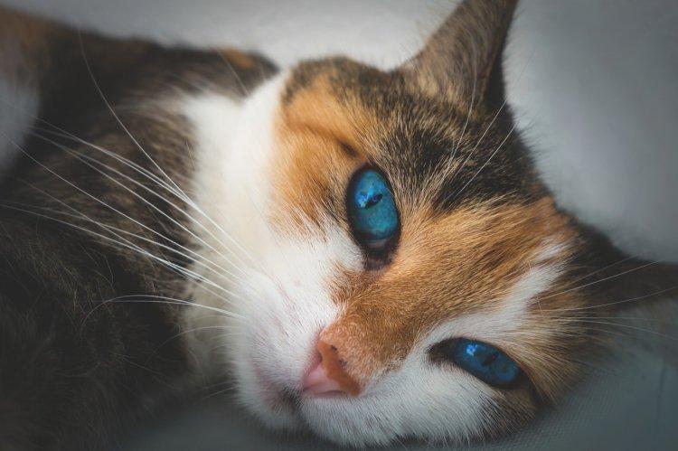 Почему кошки любят ложится на голову хозяину, рассказали ветеринары