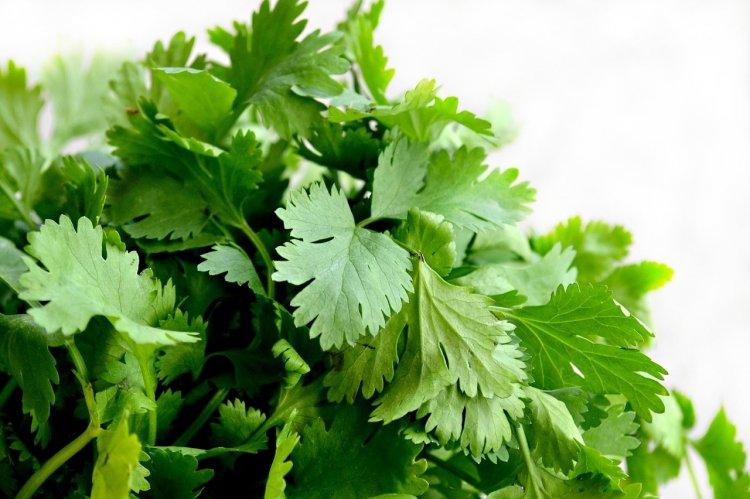 Медики рассказали, кому нельзя есть зелень