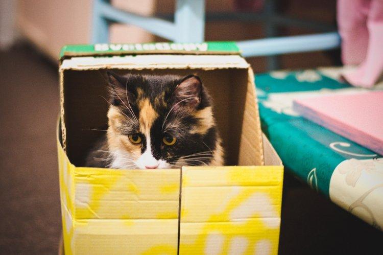 Физики из США рассказали, почему кот Шредингера может быть спасен