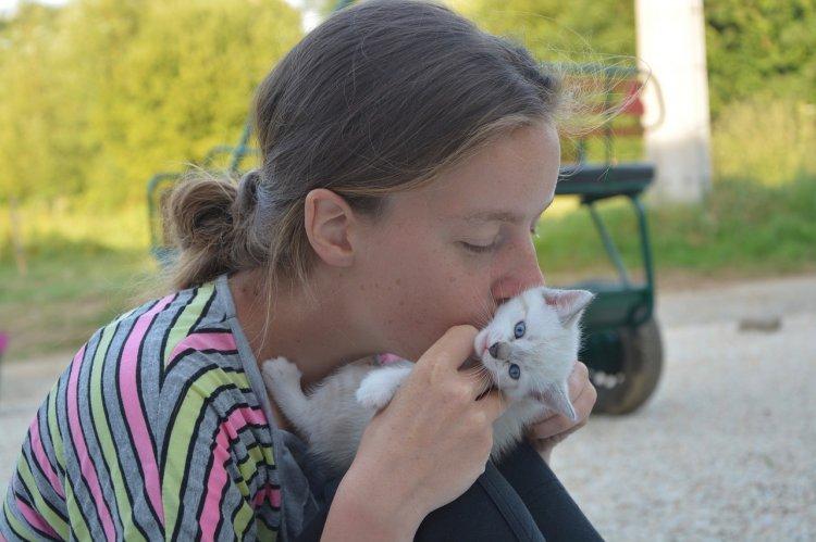 Ветеринары рассказали, почему нельзя целовать кошек