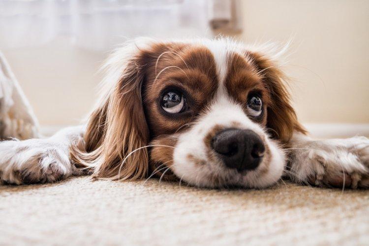 Кинолог рассказал, кому не стоит заводить домашних животных