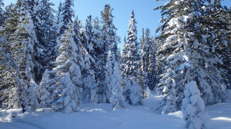 Сибирь станет приютом для миллиарда «климатических беженцев»
