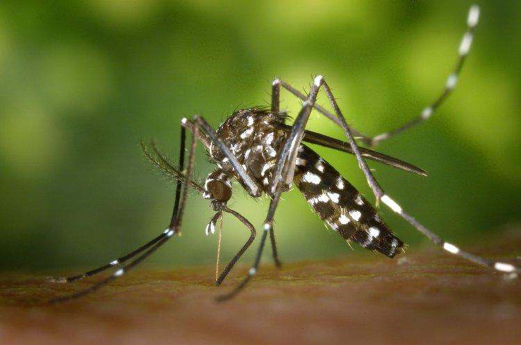 Одежда какого цвета защитит от укусов комаров?