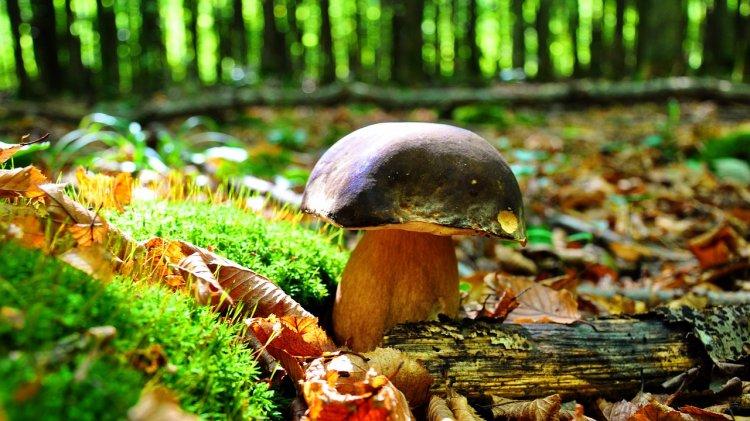 Самые полезные виды грибов, назвали эксперты