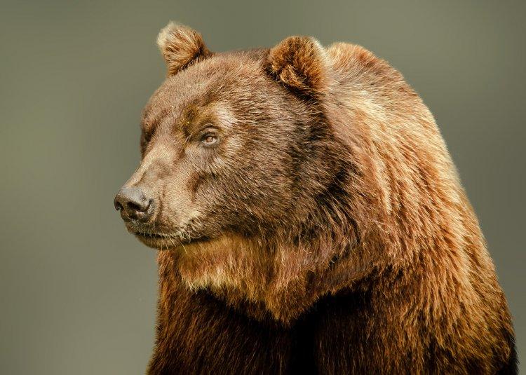Утвержден список животных, запрещенных к содержанию в России