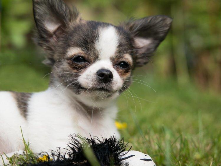 Какую собаку завести на пенсии, рассказал кинолог