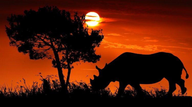 На территории башкирского геопарка нашли кости вымершего древнего носорога