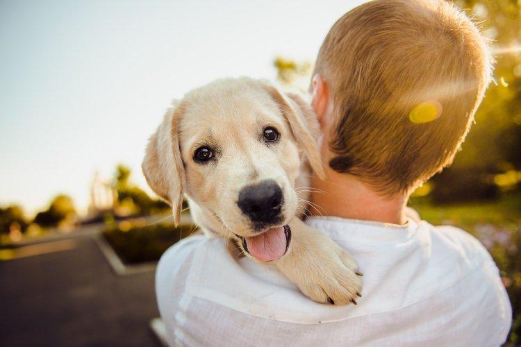 Путин подарил школьнику щенка