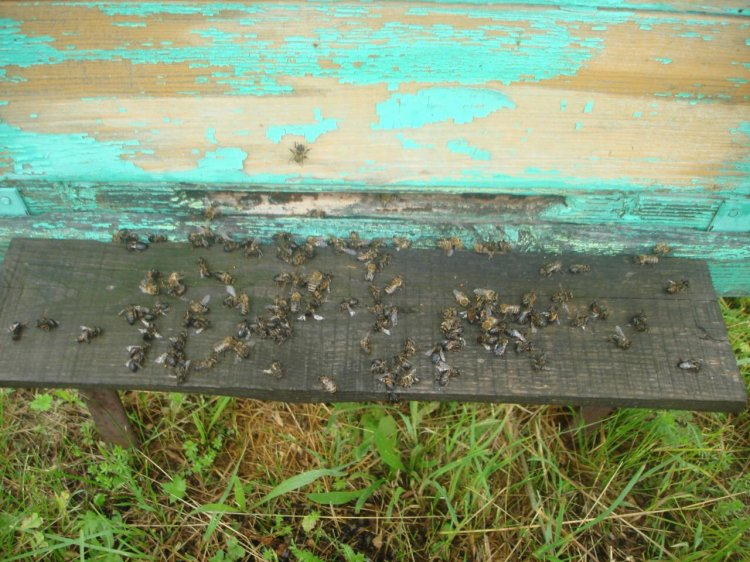 ОНФ в Башкирии просит региональный Россельхознадзор взять на контроль ситуацию с массовой гибелью пчел