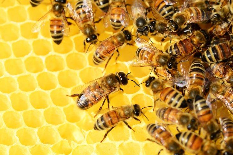 В Башкирии специально созданная межведомственная рабочая группа тщательно изучает причины гибели пчел