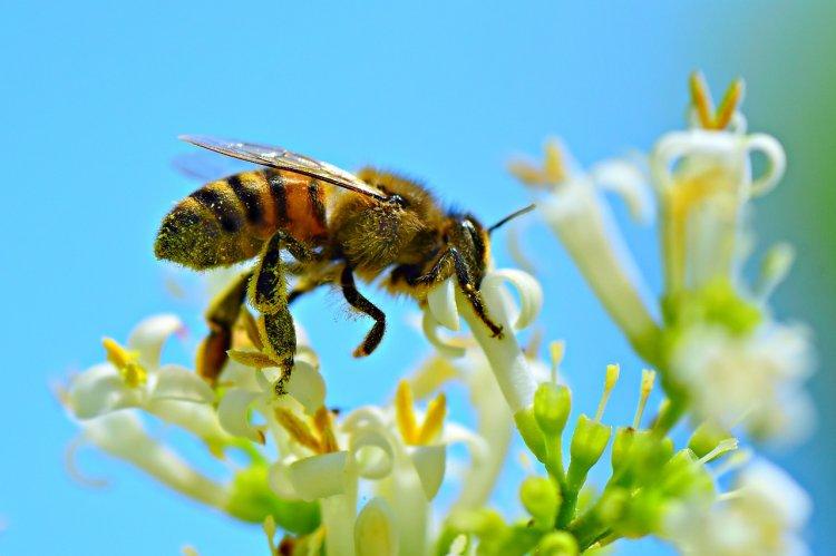 Самое страшное пророчество Ванги «про пчел» становится реальностью
