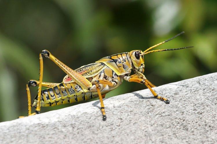 Почему люди должны начать есть насекомых, рассказали ученые