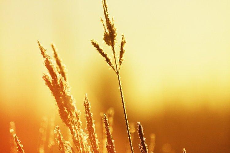 МЧС Башкирии предупреждает об аномальной жаре до +38°