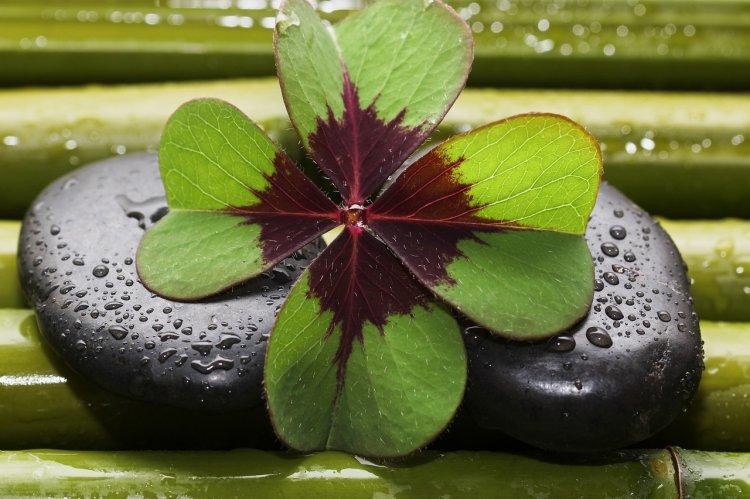 Психологи рассказали о 3 способах, как вернуть удачу