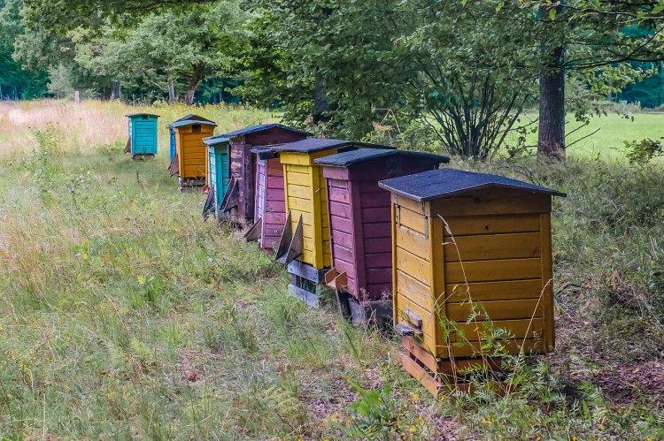 Управление Россельхознадзора по Республике Башкортостан информирует о гибели пчел от пестицидов и агрохимикатов