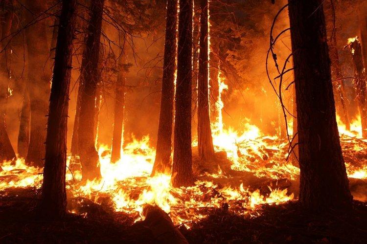 Путин поручил военным подключиться к тушению лесных пожаров в Сибири