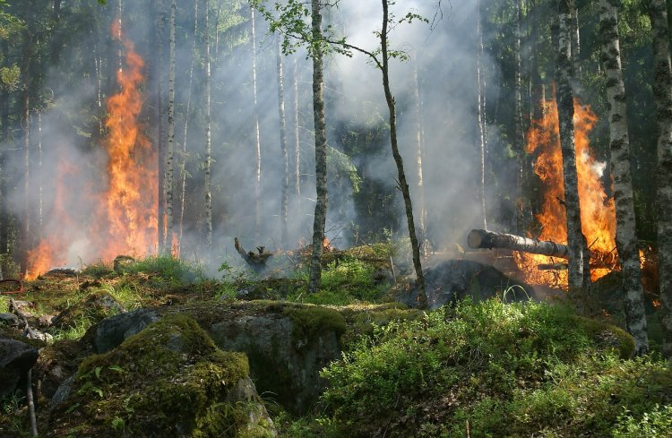 Путин и Трамп обсудили пожары в Сибири