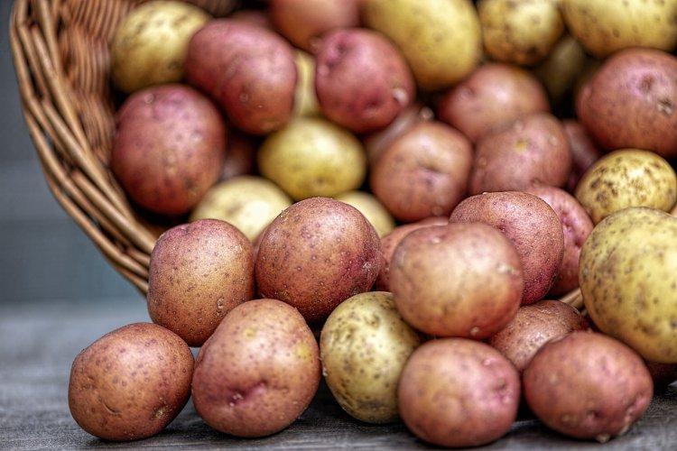 Почему нельзя отказываться от картофеля: 4 полезных свойства