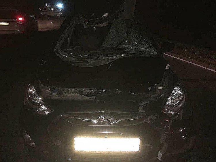 В Башкирии автомобиль насмерть задавил лося